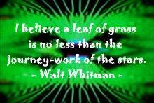 whitman_bladeofgrass