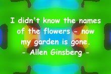 allen_flowers
