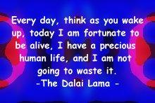 lama_everyday
