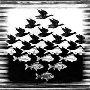 birds, fish