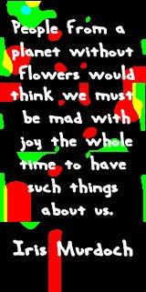 iris_flowers